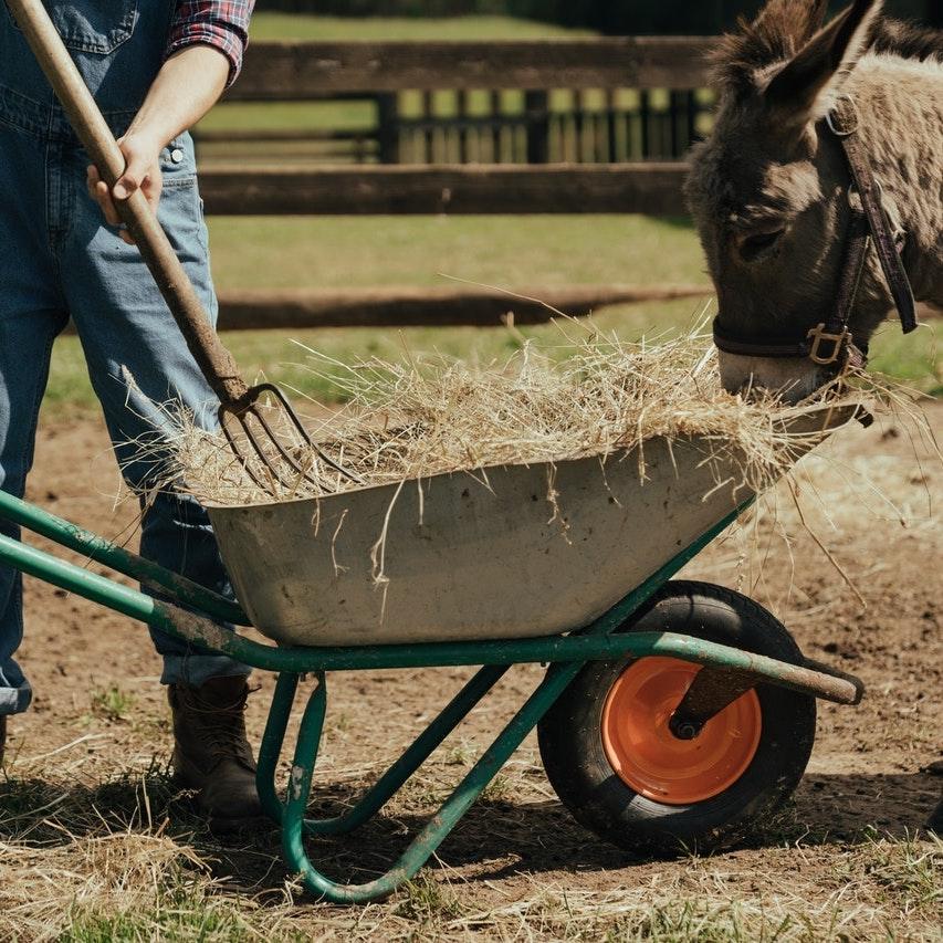 Wheelbarrow with hay
